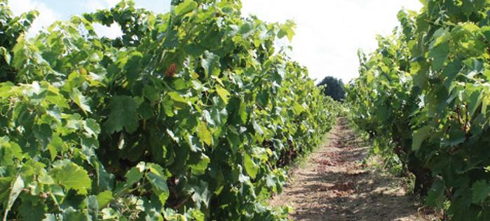 Visite guidate e degustazione vini