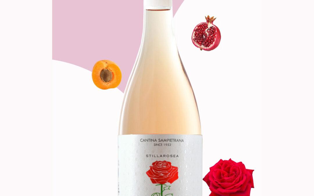 Una rosa 🌹 a maggio per festeggiare le mamme 🎉: #Stillarosea – Primitivo Rosé di Cantina Sampietrana in vigna 🥂